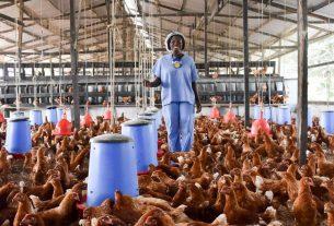 Rockland Poultry Farm