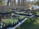 cottage creek gardens