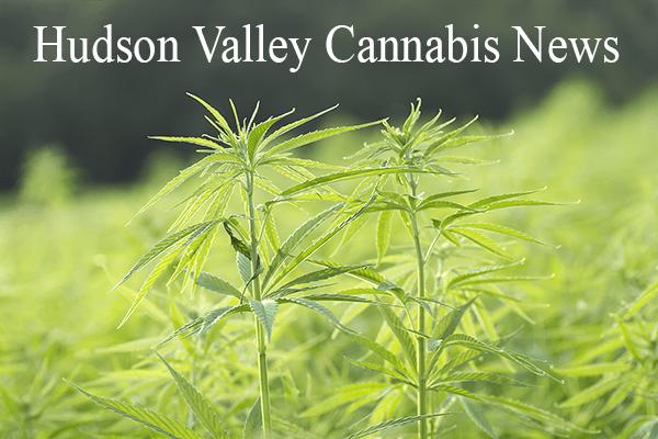 Hudson Valley Cannabis News